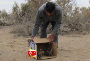 رهاسازی ۲ توله گربه وحشی در پناهگاه یخاب ابوزیدآباد