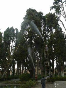 شستوشوی درختان باغ فین