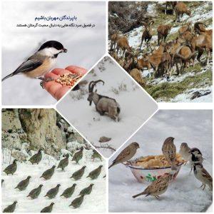 ورود گونههای نادر جانوری منطقه حفاظتشده قمصر و برزک به پایین دست در پی بارش برف