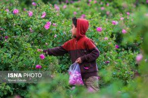 جشنواره گل و کلاب نوشآباد