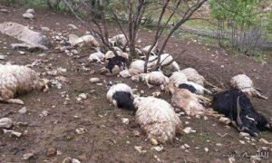 تلفشدن 96 راس گوسفند بر اثر صاعقه