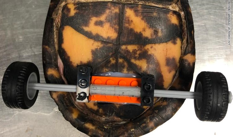 چرخهای صندلی برای لاکپشت بیپا