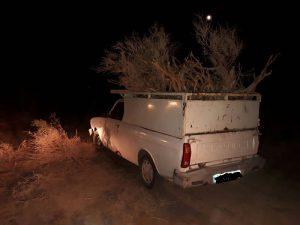 قاچاق چوب و قطع درختان تاغ در آران و بیدگل