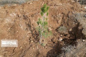 توزیع نهال برای روز درختکاری در کاشان