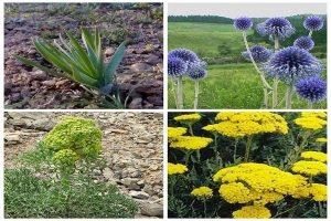 گیاهان دارویی منطقه کاشان