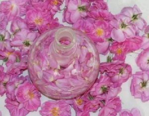 تازهنگهداشتن گل محمدی