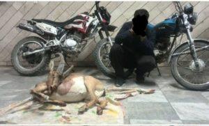 دستگیری متخلفین باسابقه شکار در کاشان