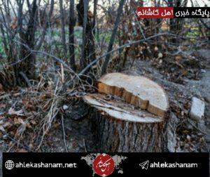 دستگیری عامل قطع درختان روستای خنب کاشان