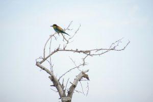 مستندنگاری ۳ پرنده جدید در پناهگاه حیات وحش یخاب