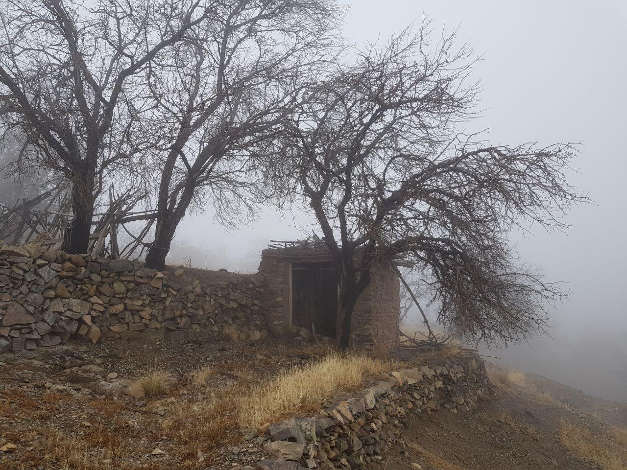 درختان در مه